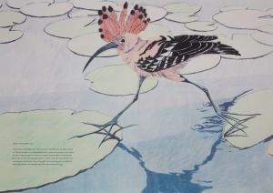 FMP_bird(3)