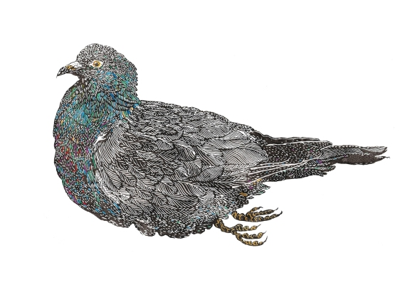 Pigeon_700-websize